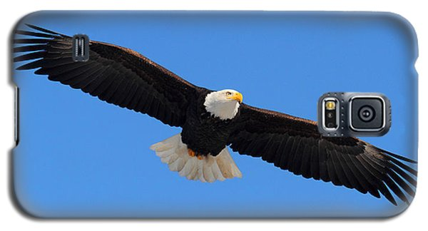 Flying Bald Eagle Galaxy S5 Case