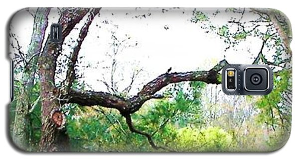 Galaxy S5 Case featuring the photograph Flying Branch by Pamela Hyde Wilson