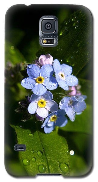 Forget Me Not Galaxy S5 Case by Ralph A  Ledergerber-Photography