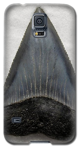 Fossil Great White Shark Tooth Galaxy S5 Case by Werner Lehmann