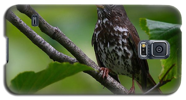 Fox Sparrow Galaxy S5 Case