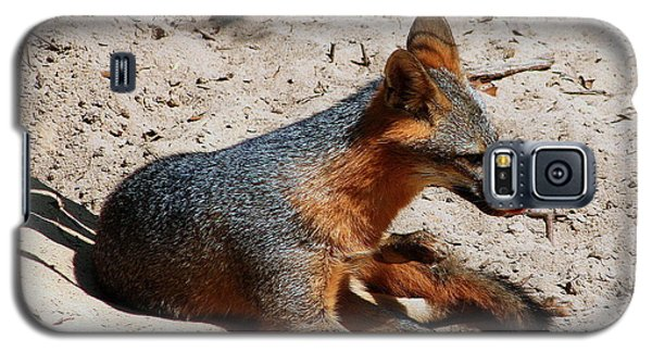 Galaxy S5 Case featuring the photograph Foxie by Debra Forand