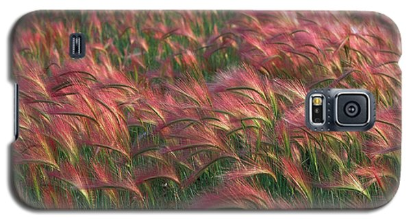 Galaxy S5 Case featuring the photograph Foxtail Barley by Doug Herr