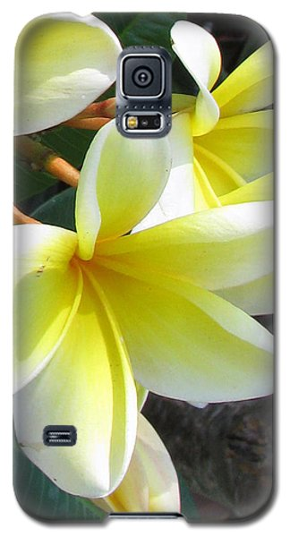 Galaxy S5 Case featuring the photograph Frangipani Up Close by Debi Singer