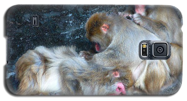 Galaxy S5 Case featuring the photograph Free Buffet And Grooming by Sarah McKoy
