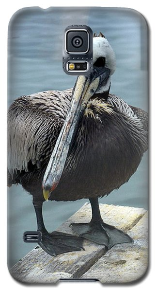 Galaxy S5 Case featuring the photograph Friendly Pelican by Carla Parris