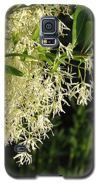 Fringe Tree Galaxy S5 Case by Rebecca Overton
