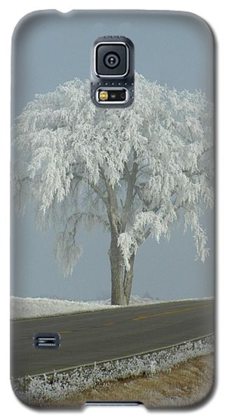 Galaxy S5 Case featuring the photograph Frost On The Big Tree  by Penny Meyers