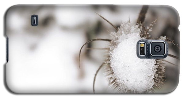 Galaxy S5 Case featuring the photograph Frozen Plant by Lenny Carter