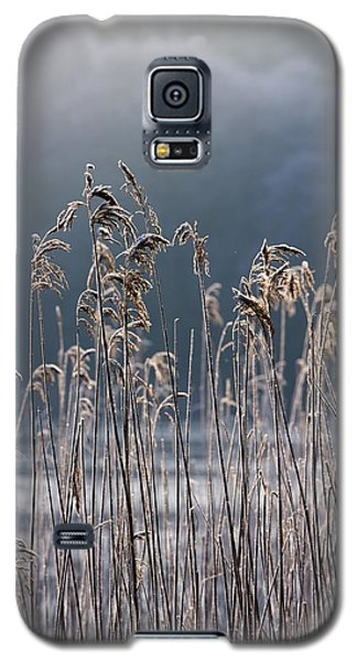 Frozen Reeds At The Shore Of A Lake Galaxy S5 Case
