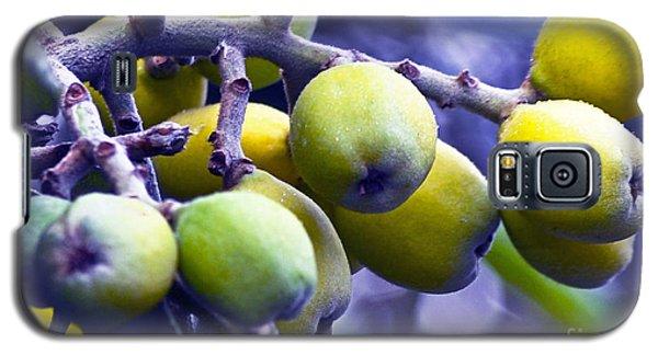 Sicilian Fruits Galaxy S5 Case