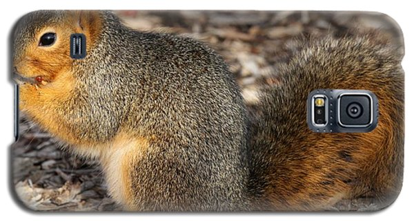 Galaxy S5 Case featuring the photograph Fruity Squirel by Elizabeth Winter