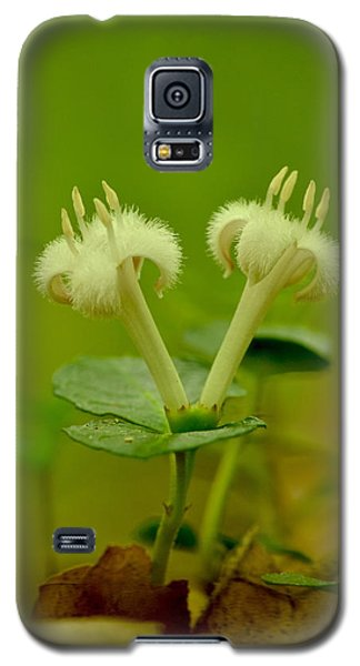 Fuzzy Blooms Galaxy S5 Case by JD Grimes