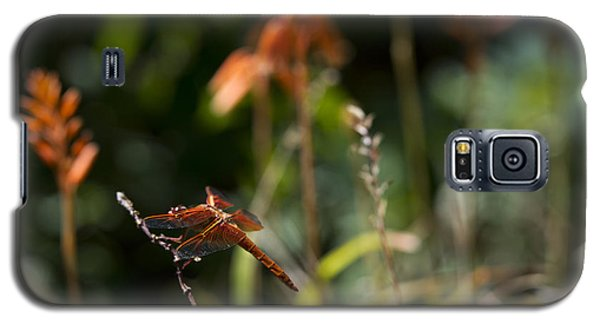 Galaxy S5 Case featuring the photograph Garden Orange  by Priya Ghose