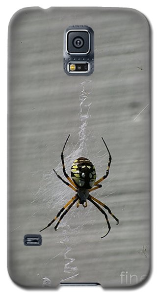 Galaxy S5 Case featuring the photograph Garden Spider by Tannis  Baldwin