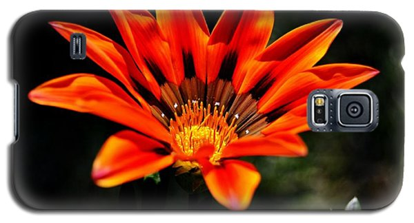 Galaxy S5 Case featuring the photograph Gazania Krebsiana Flower by Werner Lehmann