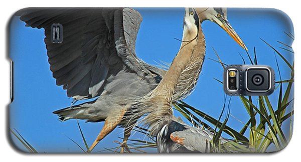 Galaxy S5 Case featuring the photograph Great Blue Heron Courtship Display by Larry Nieland