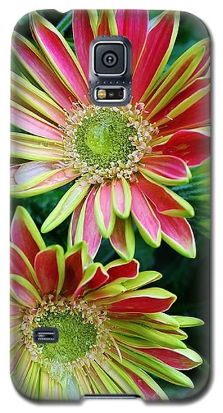 Galaxy S5 Case featuring the photograph Gerber Daisies by Bruce Bley