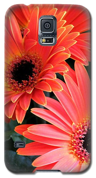 Gerbera Bliss Galaxy S5 Case by Rory Sagner