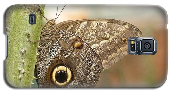 Galaxy S5 Case featuring the photograph Giant Owl Butterfly by Lynn Bolt
