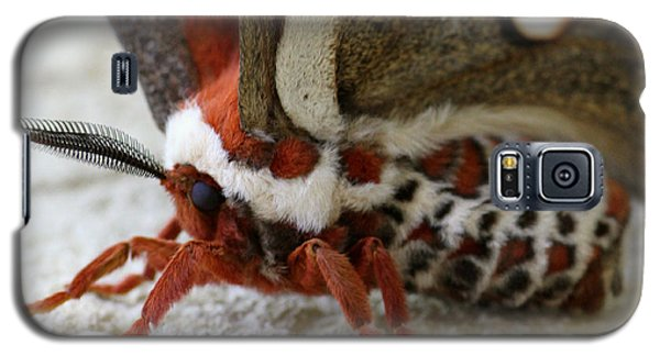 Giant Silkworm Moth 049 Galaxy S5 Case