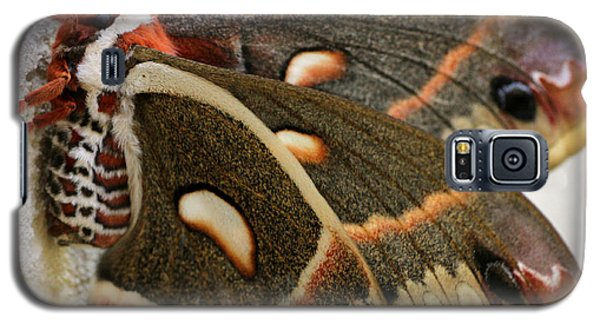 Giant Silkworm Moth 063 Galaxy S5 Case