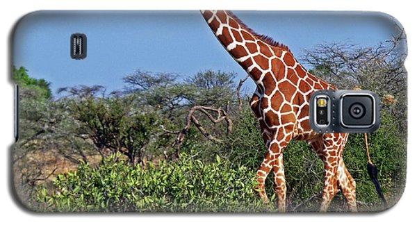 Giraffe Against Blue Sky Galaxy S5 Case