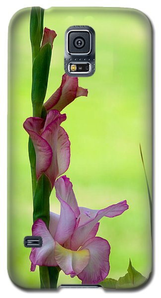 Galaxy S5 Case featuring the photograph Gladiolus Blossoms by Ed Gleichman