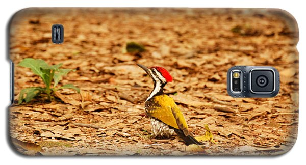 Galaxy S5 Case featuring the photograph Golden Backed Woodpecker by Fotosas Photography