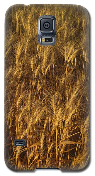 Golden Beauty Galaxy S5 Case