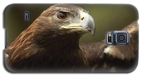 Galaxy S5 Case featuring the photograph Golden Eagle by Doug Herr