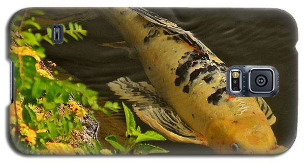 Galaxy S5 Case featuring the photograph Golden Koi by Kirsten Giving