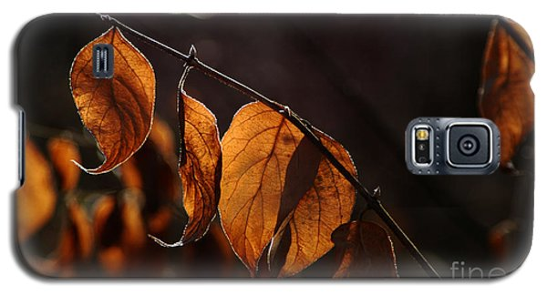 Galaxy S5 Case featuring the photograph Golden Leaves by Vilas Malankar
