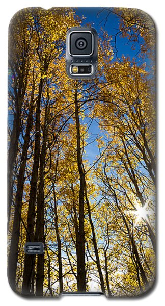 Galaxy S5 Case featuring the photograph Golden Whispers by Randy Wood