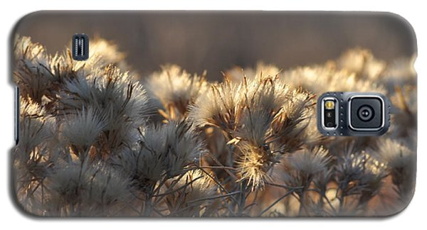 Galaxy S5 Case featuring the photograph Gone To Seed by Fran Riley
