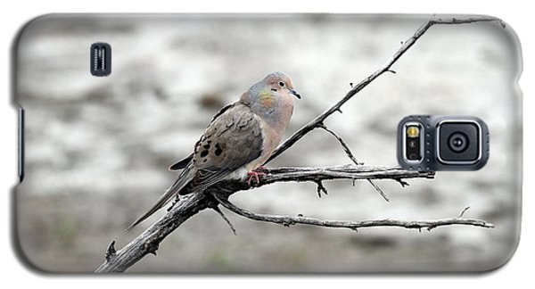 Galaxy S5 Case featuring the photograph Good Morning Dove by Elizabeth Winter