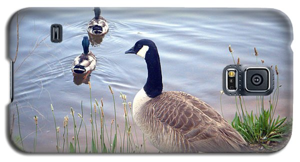 Galaxy S5 Case featuring the photograph Goose And Ducks by Kelly Hazel