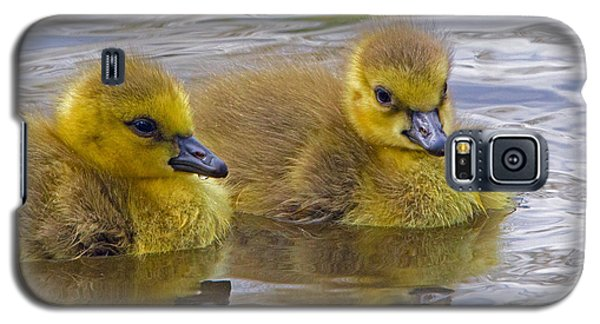 Goslings Galaxy S5 Case