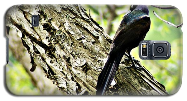 Grackle 1 Galaxy S5 Case