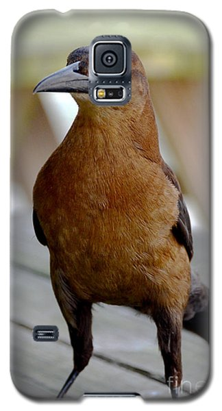 Galaxy S5 Case featuring the photograph Grackle by Pravine Chester