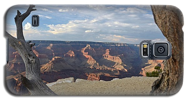Grand Canyon Tree Galaxy S5 Case