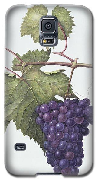 Grapes  Galaxy S5 Case by Margaret Ann Eden