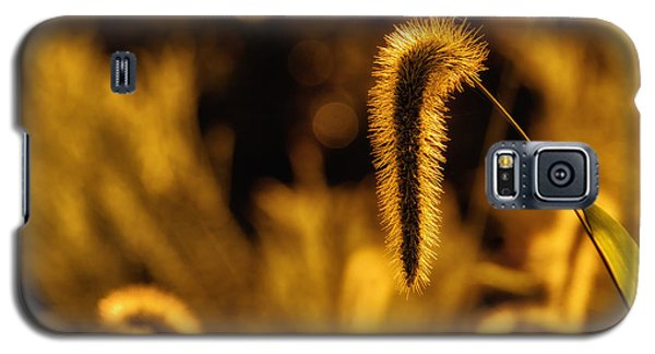 Grass In Golden Light Galaxy S5 Case