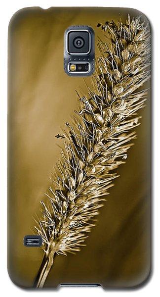 Grass Seedhead Galaxy S5 Case
