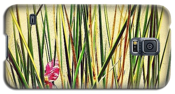 Scenic Galaxy S5 Case - Grasses by Julie Gebhardt
