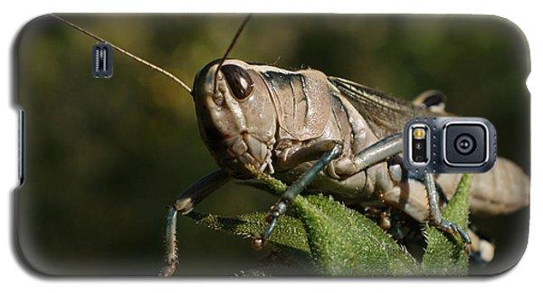 Grasshopper 2 Galaxy S5 Case by Ernie Echols