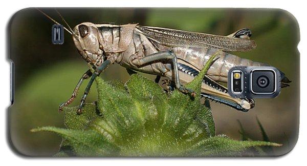 Grasshopper Galaxy S5 Case by Ernie Echols