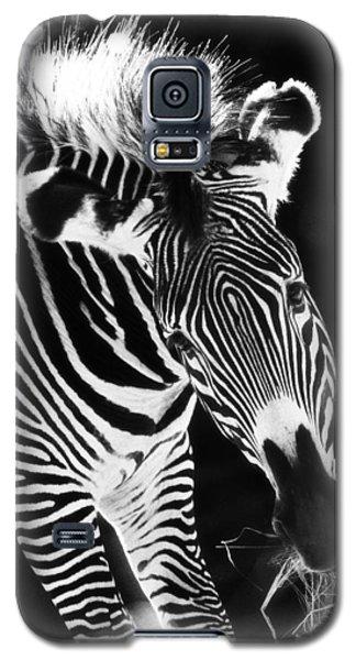 Gravy Zebra Galaxy S5 Case