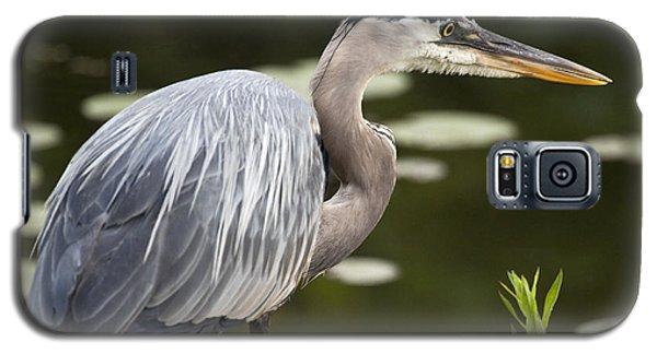 Great Blue Heron  Galaxy S5 Case by Jeannette Hunt