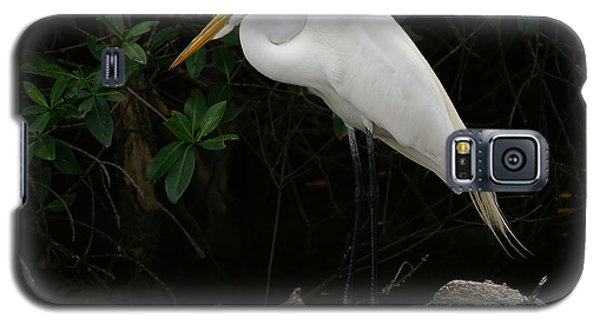 Galaxy S5 Case featuring the photograph Great Egret by Anne Rodkin